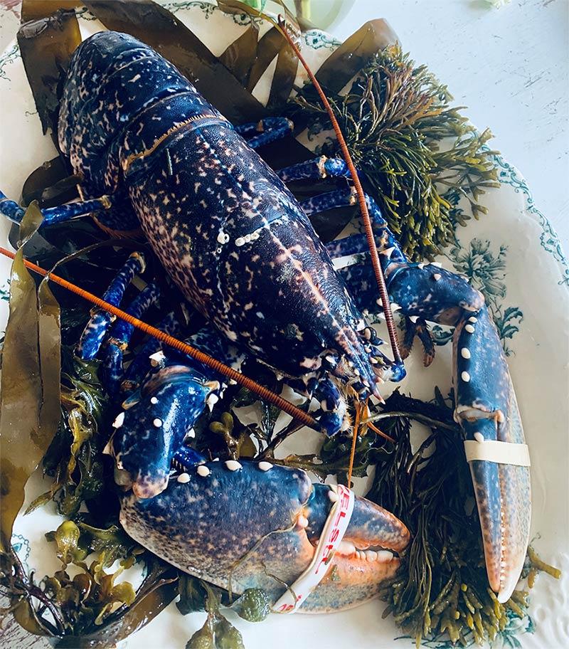 order live lobsters online in UK